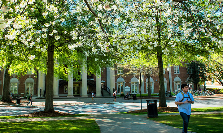 flowering trees outside campus building